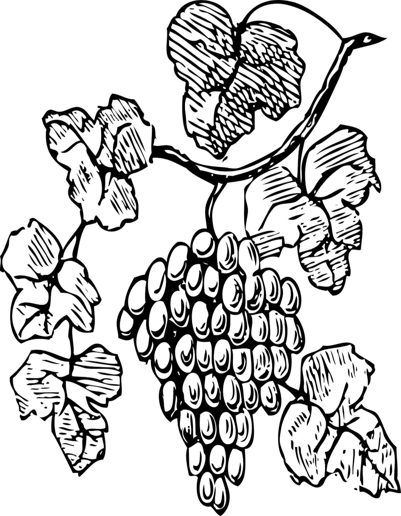 Free Printable Grapes Coloring Page | Arts N Crafts | Pinterest ...