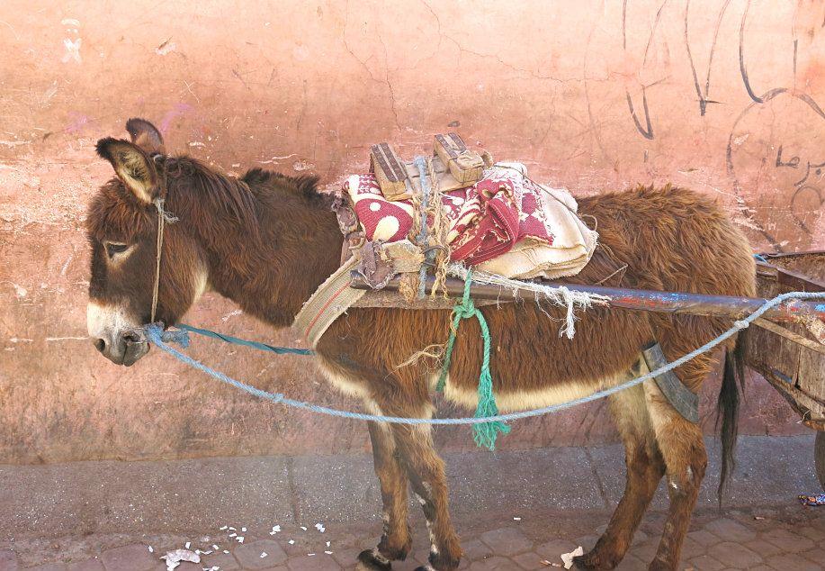 Marokko: Ein Roadtrip mit Kind oder wie ich Bart Simpson traf.  #Marokko #Esel #Roadtrip http://www.hiddengem.de/marokko-roadtrip-mit-kind/