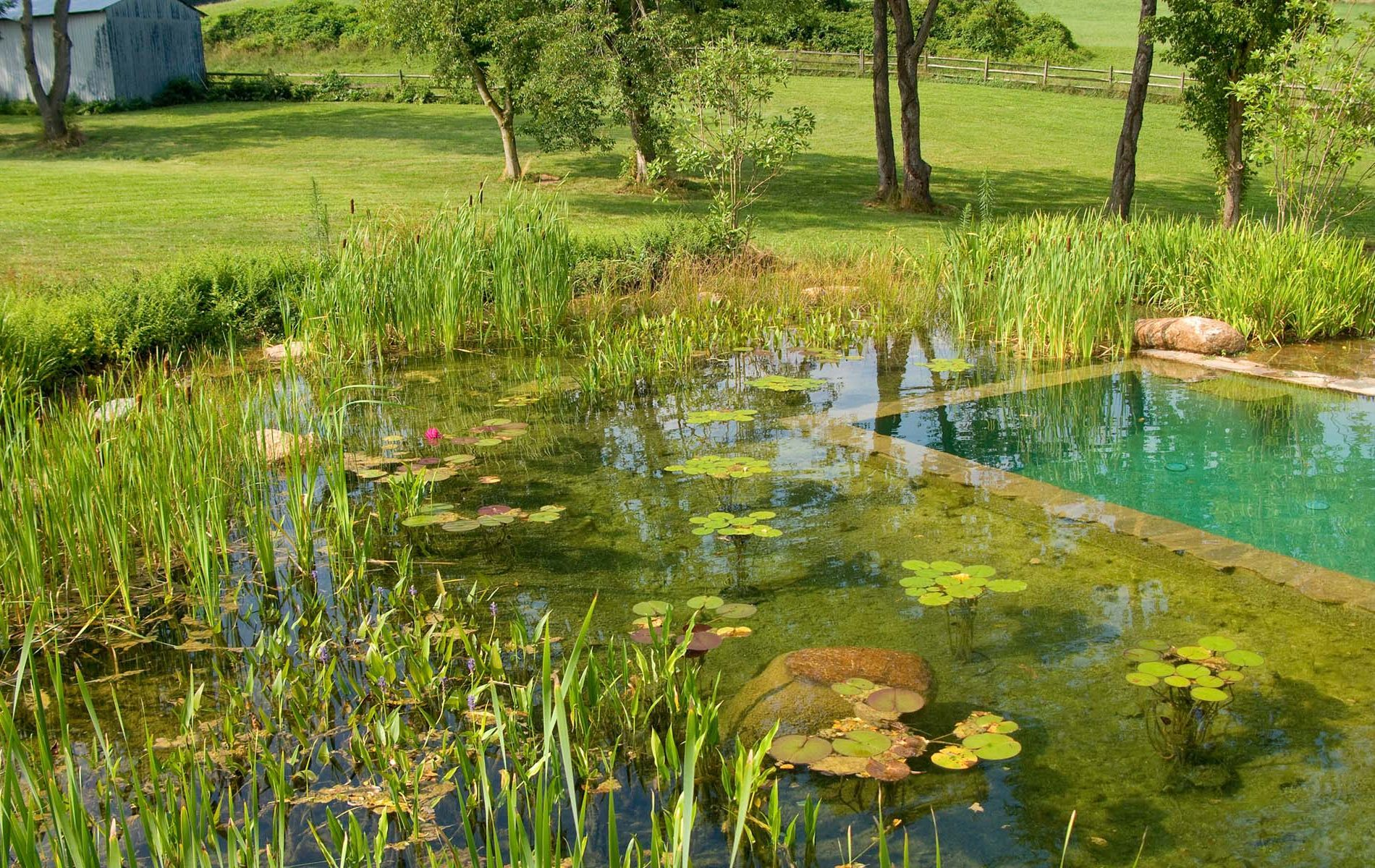 Building a natural swimming pool - 17 Best Images About Eco Piletas On Pinterest Cornwall Green Plants And Natural