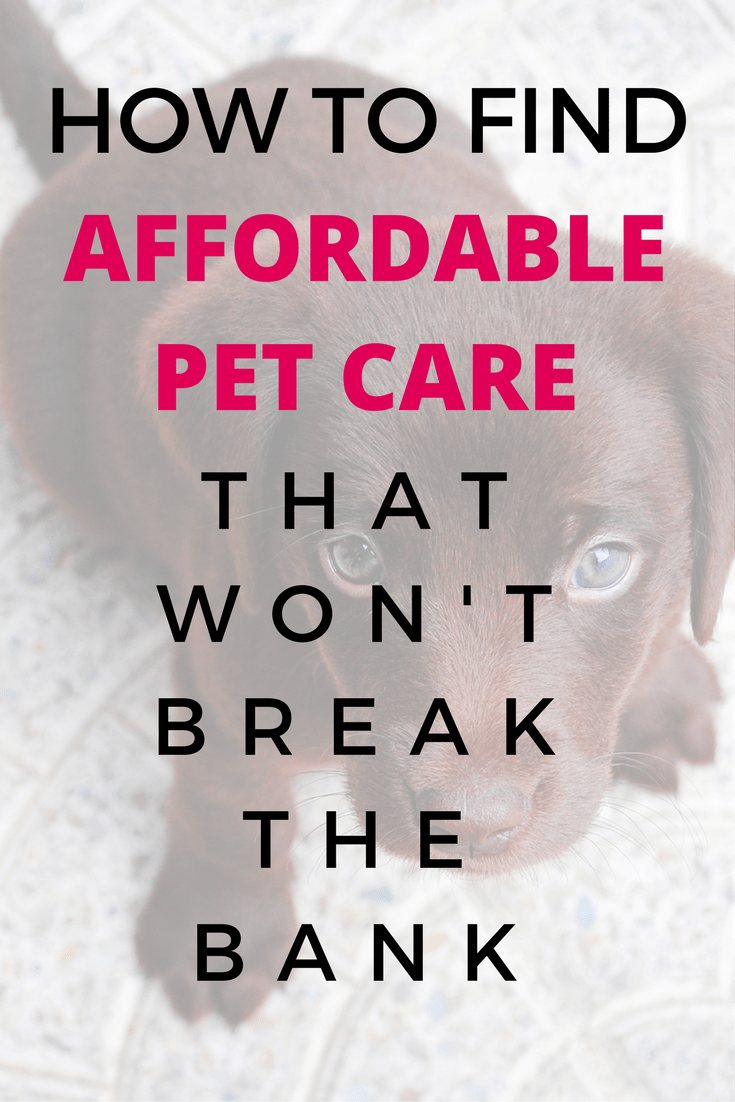 Affordable Pet Care Near You That Won T Break The Bank Pet Care