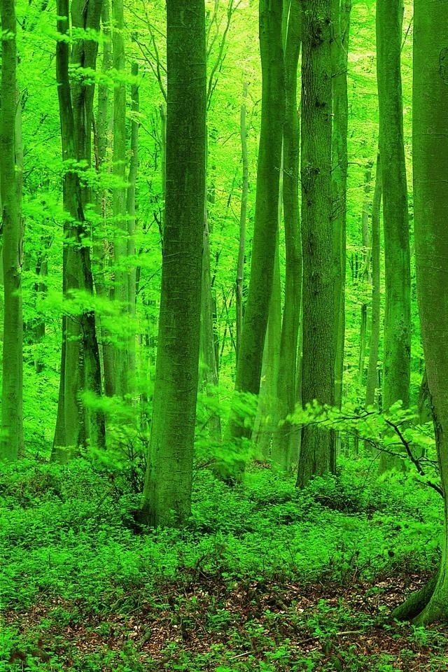 awesome beautiful forest woods wallpapers for iphone 3gs