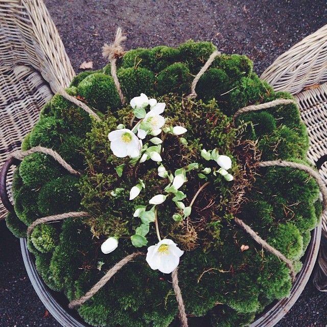 Moss Wreath I Zetas Tradgard Bloemstukken Bloemboeketten En