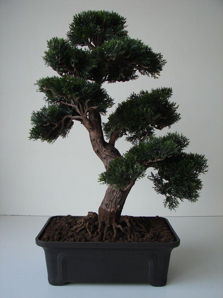 bonsai zeder 60 cm getopft k nstliche pflanze dekobaum baum kunstbaum dekoration dekoration. Black Bedroom Furniture Sets. Home Design Ideas