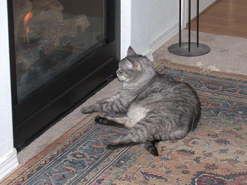 Pi enjoying the fireplace