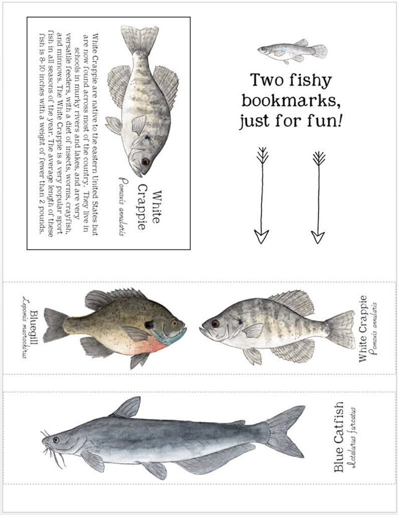 Freshwater Fish From North America Learning Cards Digital Etsy In 2020 Learning Cards North America Overnight Prints