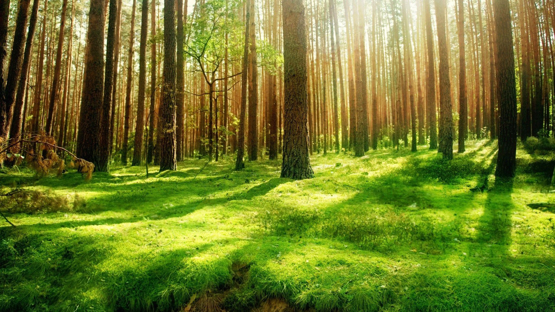 sunlight in forest desktop background healing images pinterest
