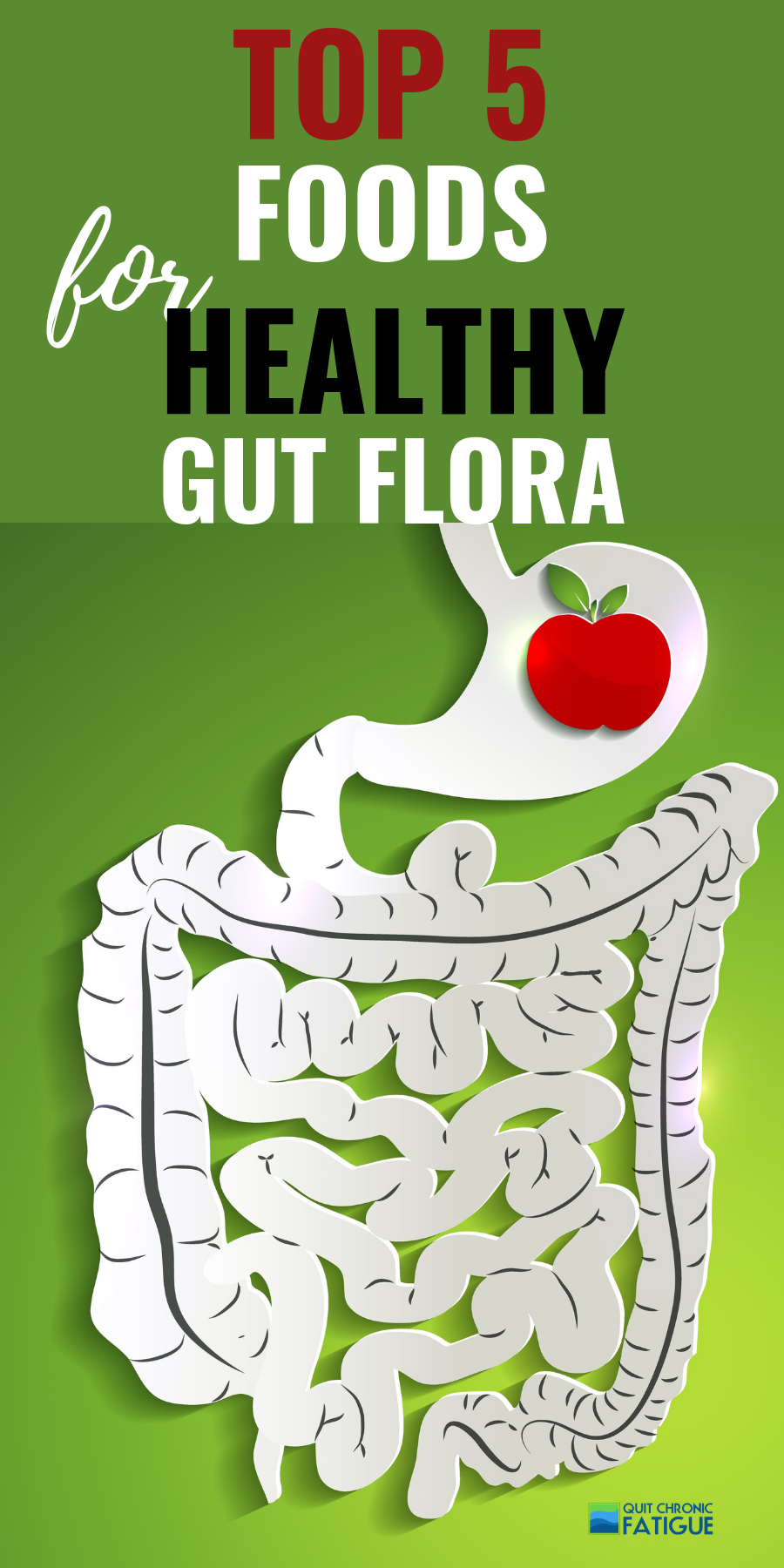 Foods That Help Gut Flora Healthy gut, Healthy flora