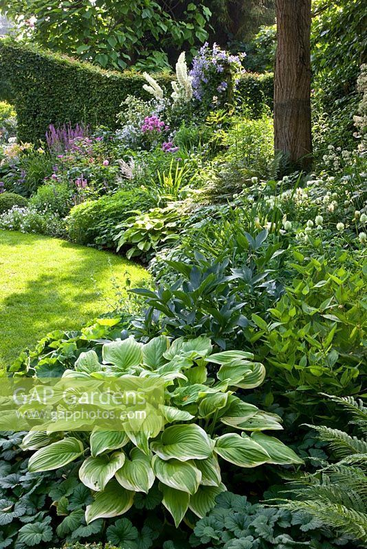 Hostas in mixed border