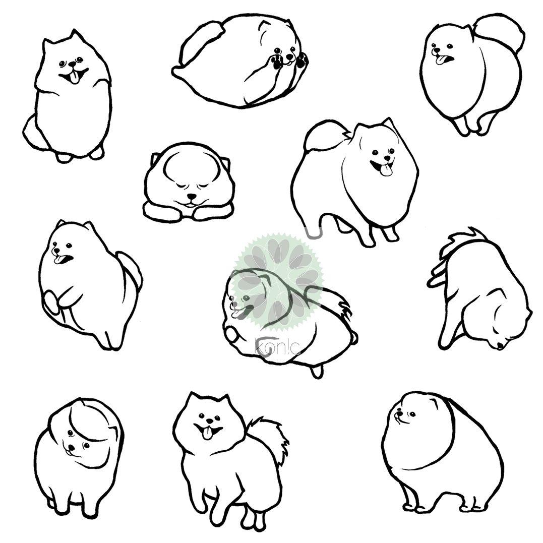 Pomeranian Pomeranians Pommies Pommie Poms Drawings