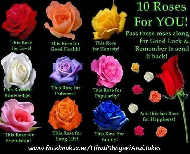 Meaning Of A Rose Rose Rose Color Meanings Rose Meaning
