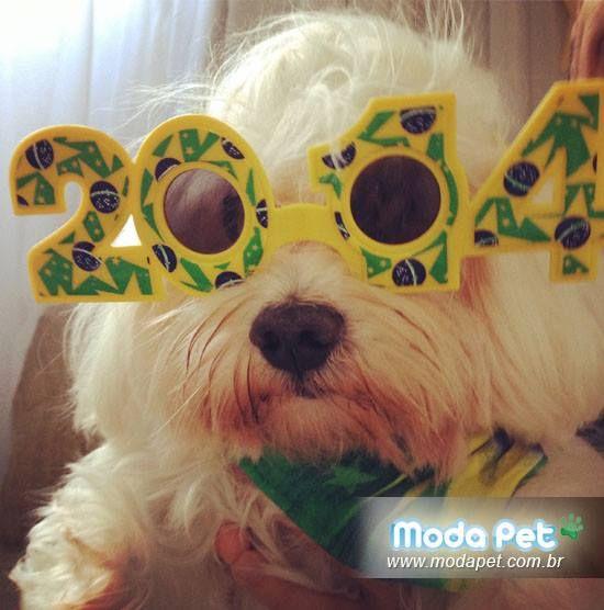 MEU PET NA MODA   Nosso mascotinho adora torcer pelo Brasil!! Na foto ele usa Bandana Brasil e óculos da 25 de março/SP. #meupetnamoda