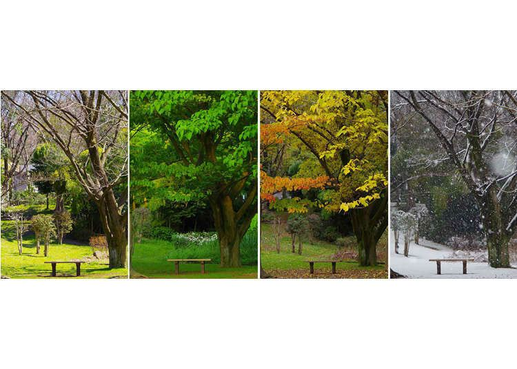 Japan S Weather Four Seasons All About The Climate Of Japan