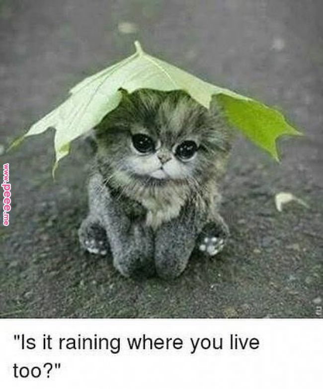 Come Train On This Rainy Day Fitness Rainyday Warmup Wereopen Cardio Weights Toning Flexibility Fr Cute Animals Cute Baby Animals Cute Animal Pictures