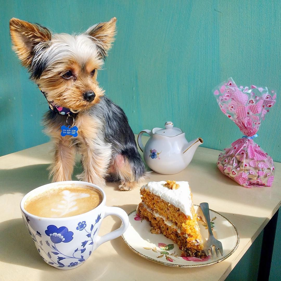4 Dog Friendly Cafes For Dog Lovers In Montreal Rover Com Dog Cafe Animal Articles Your Dog