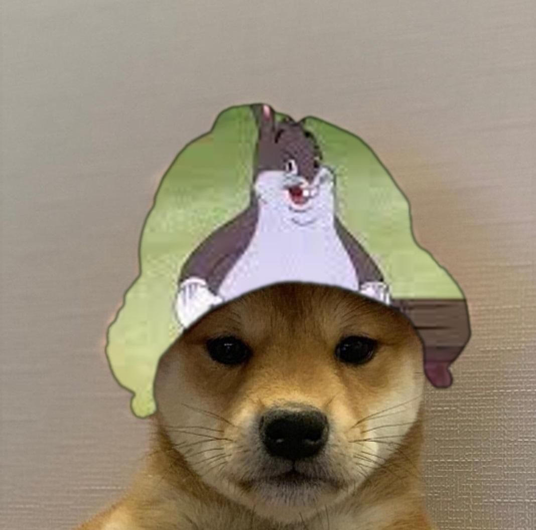 Big Chungus Dogwifhat Dogwifhat Dog Icon Dog Images Dog Projects