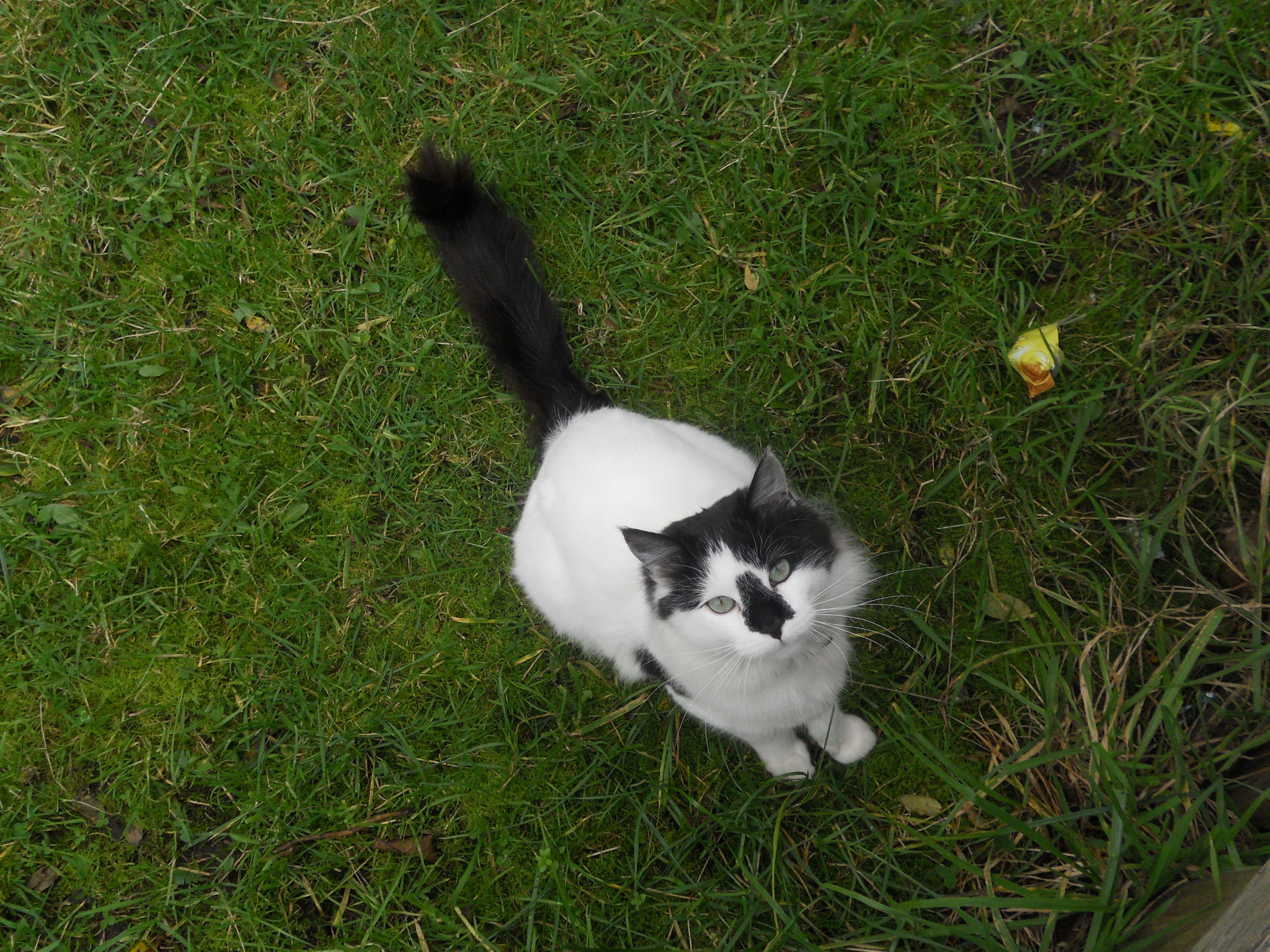 gatito en tenaùn, chiloe