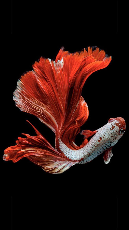 Pescado Rojo Rote Fische Fisch Zeichnung Schone Fische