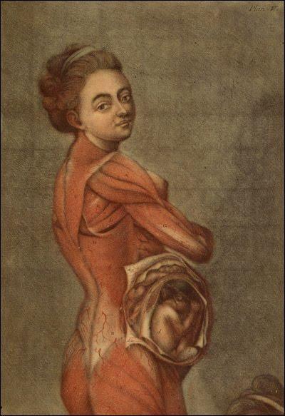 Medicina y Arte: Ilustración anatómica de una mujer embarazada ...