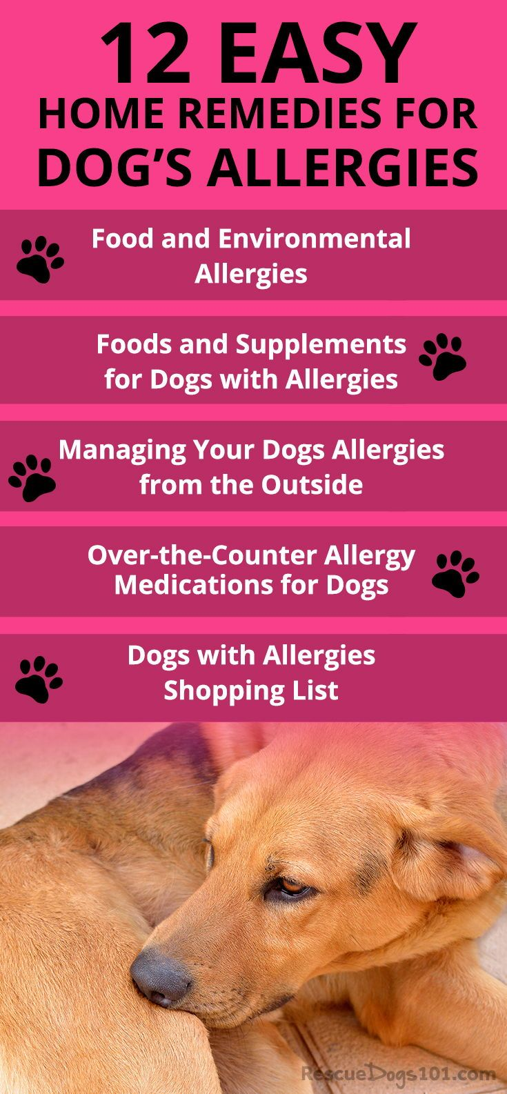 The Ultimate Guide To Home Remedies For Dog Allergies Dog Allergies Remedies Dog Allergies Dog Remedies