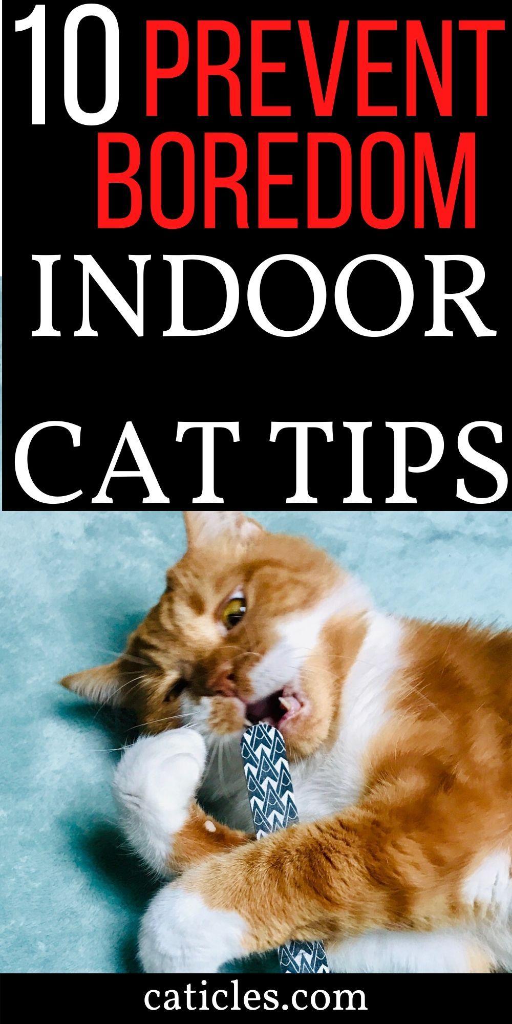 Cat Essentials List 10 Things Every Cat Should Have Cat Essentials Indoor Cat Cat Activity