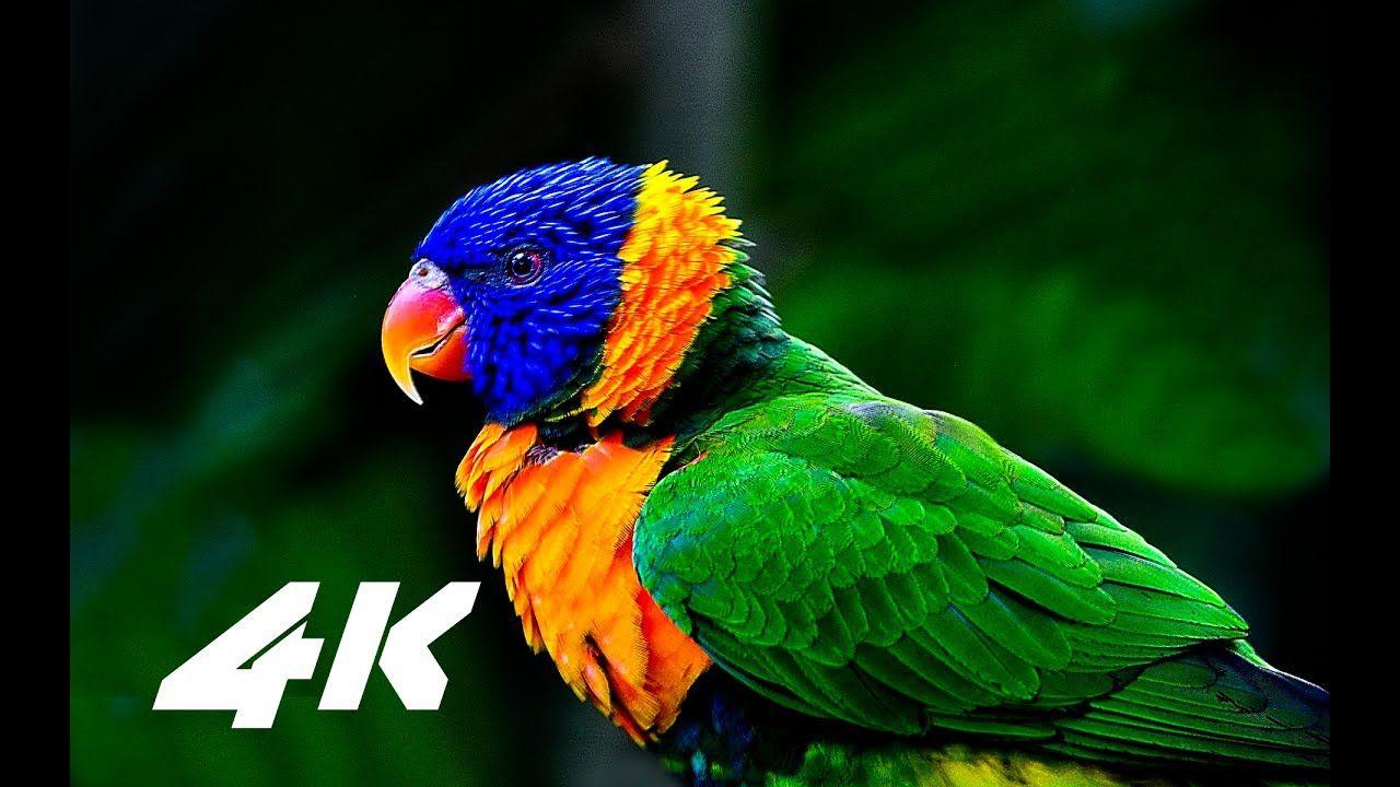 4k resolution video demo download