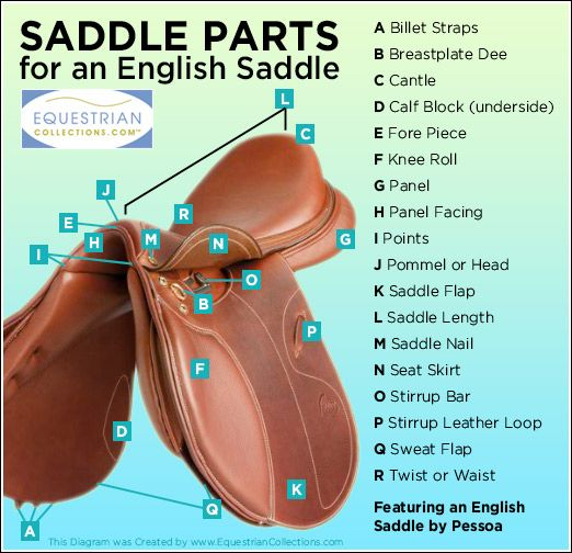 Saddle Parts of an English Saddle | Molly n Lilly ...