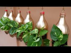 Make Your Extra Wooden Plank into Hanging Planter Using Plastic Bottles with Money Plants