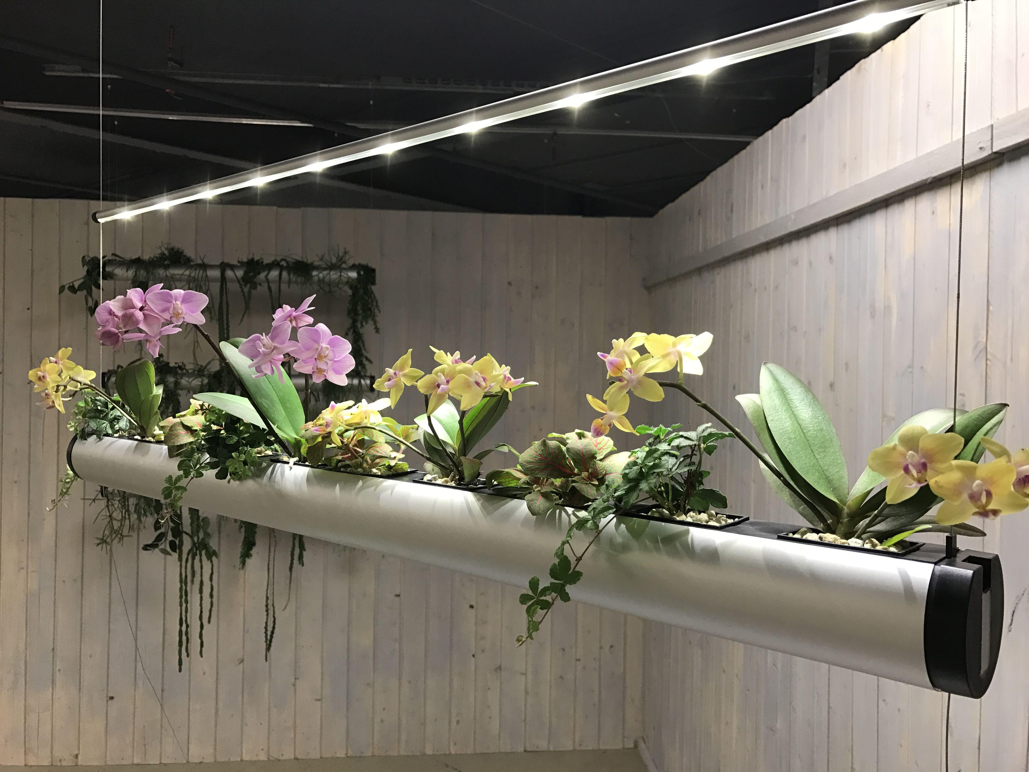 pendualris mit orchideen und led licht ideal f r einen modernen empfang oder das wohnzimmer. Black Bedroom Furniture Sets. Home Design Ideas