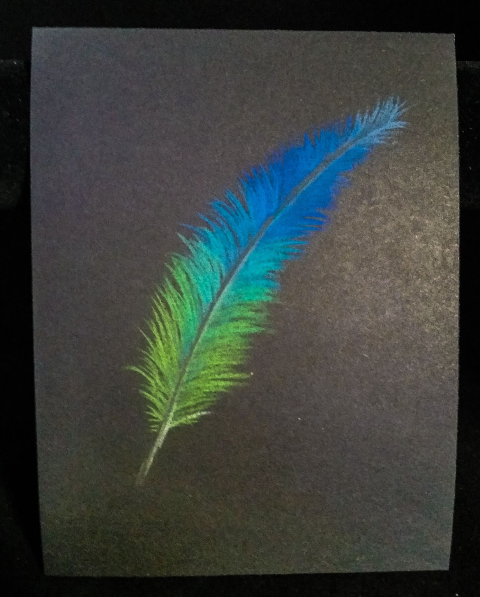 feather sketch pastel on black black paper pastels