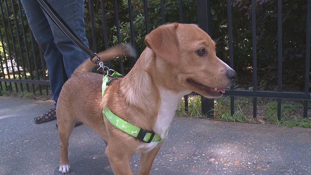 Animal rescue groups in NWLA battle parvo outbreak