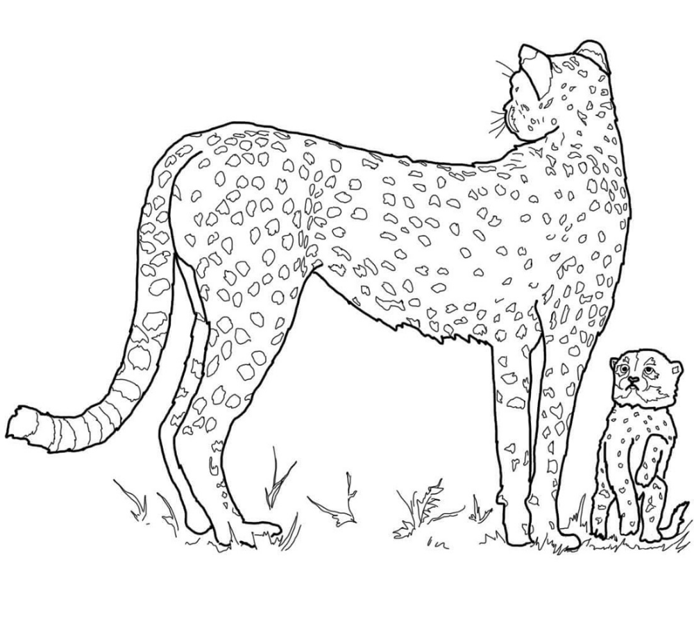 Free Cheetah Coloring Pages K5 Worksheets Animal Coloring Pages Baby Coloring Pages Horse Coloring Pages