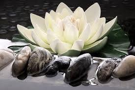 afbeelding lotusbloem - Google zoeken