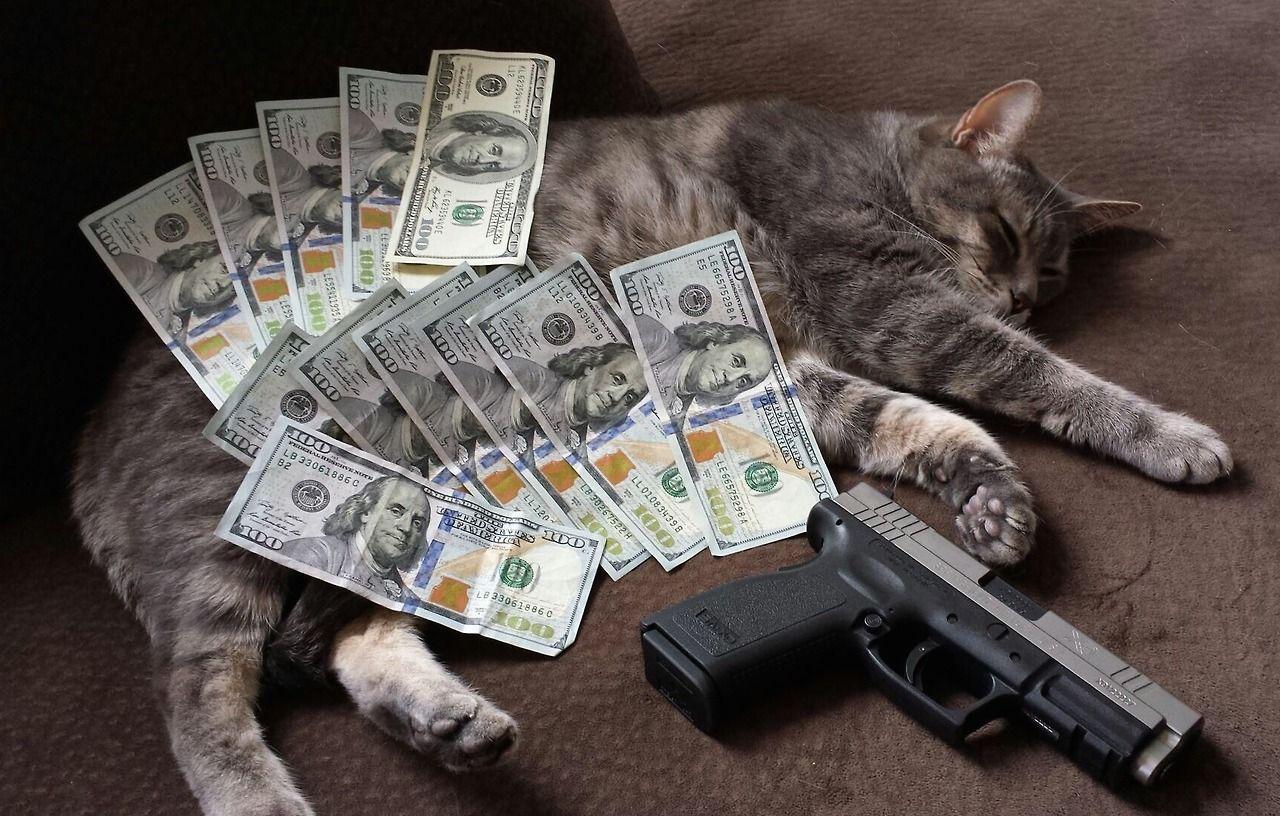 Картинки животные и деньги