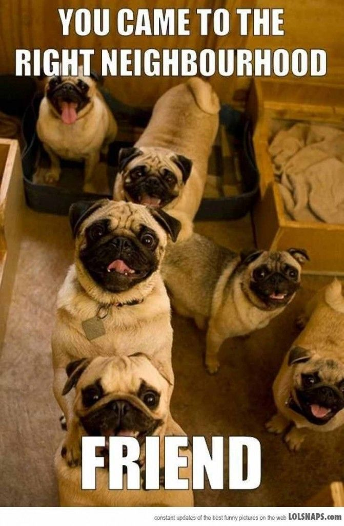 Enjoy Prompt 1 Your Delights Pugs Funny