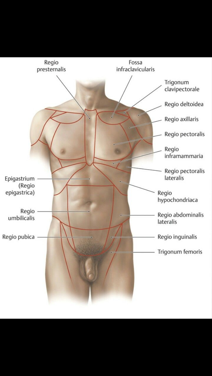 medium resolution of diagram of epigastrium