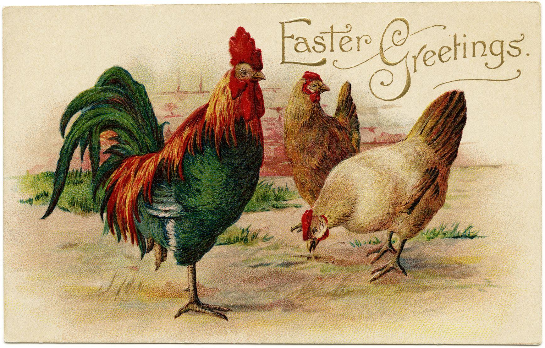 Vintage easter postcard rooster hen clip art old fashioned vintage easter postcard rooster hen clip art old fashioned easter card printable chicken kristyandbryce Gallery