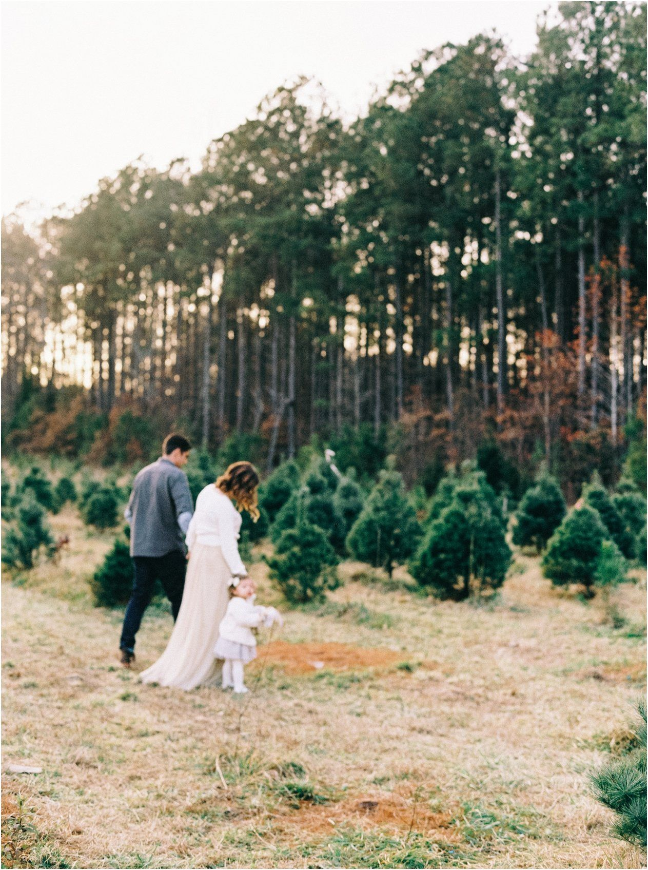 Christmas Tree Family Session With Nikki Santerre Merry Christmas Darling Seasons Of Life Christmas Tree Farm