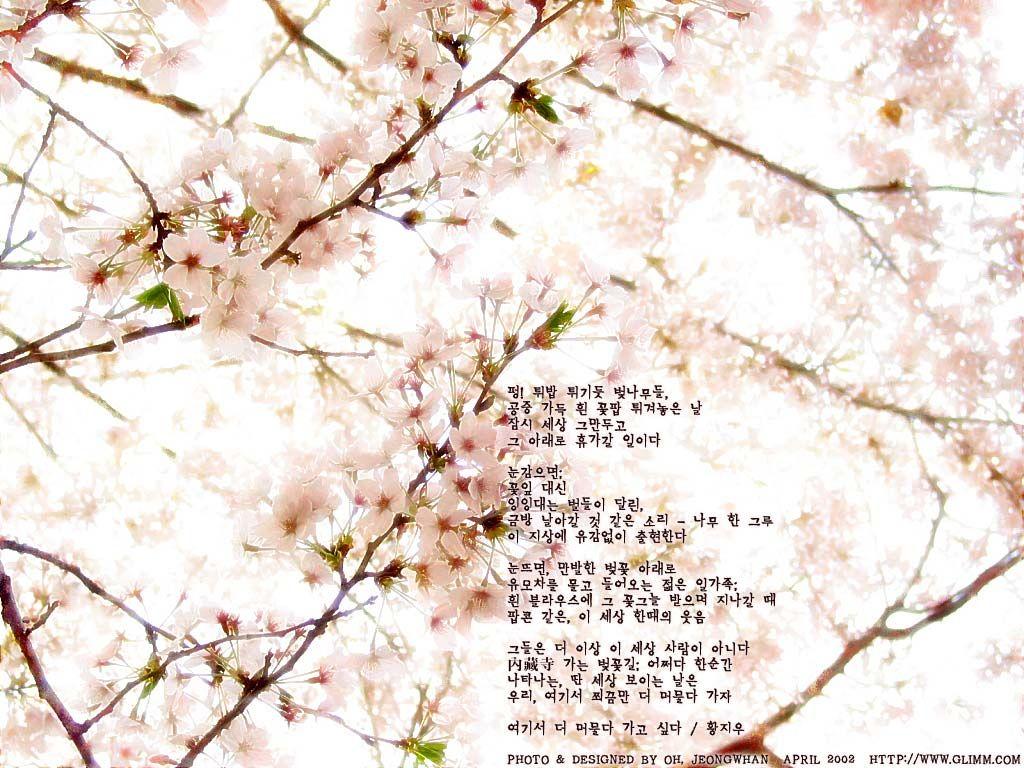 """펑! 튀밥 튀기듯 벚나무들,  공중 가득 흰 꽃팝 튀겨놓은 날  잠시 세상 그만두고  그 아래로 휴가갈 일이다      눈감으면;  꽃잎 대신  잉잉대는 벌들이 달린,  금방 날아갈 것 같은 소리-- 나무 한 그루  이 지상에 유감없이 출현한다      눈뜨면, 만발한 벚꽃 아래로  유모차를 몰고 들어오는 젊은 일가족;  흰 블라우스에 그 꽃그늘 받으며 지나갈 때  팝콘 같은, 이 세상 한때의 웃음      그들은 더 이상 이 세상 사람이 아니다  內藏寺 가는 벚꽃길; 어쩌다 한순간  나타나는, 딴 세상 보이는 날은  우리, 여기서 쬐끔만 더 머물다 가자   황지우 """"여기서 더 머물다 가고 싶다"""""""