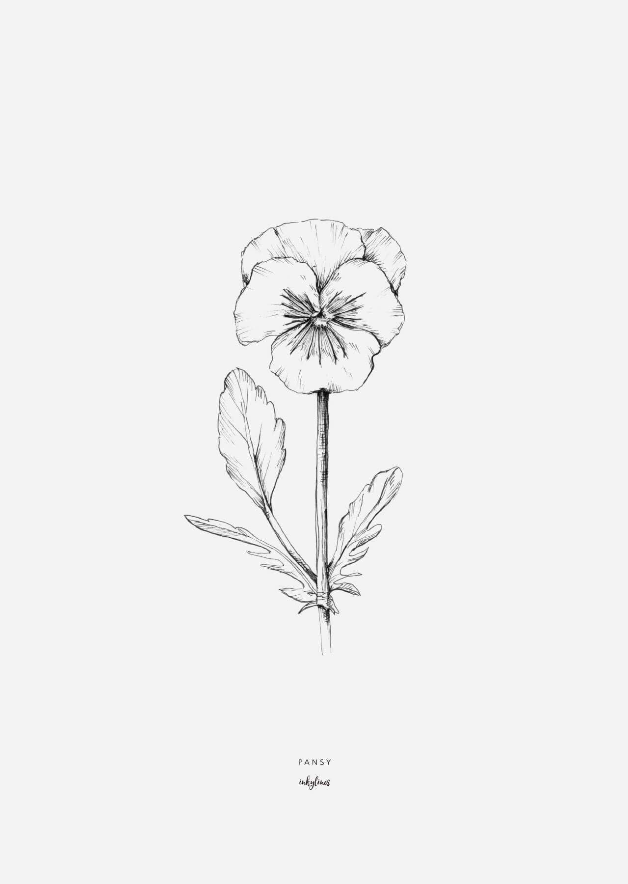 A4 Posters Pansy In 2020 Pansy Tattoo Flower Drawing Pansies Flowers