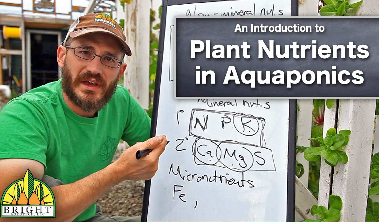 Plant nutrients in aquaponics - video + blog post by Dr. Nate Storey.