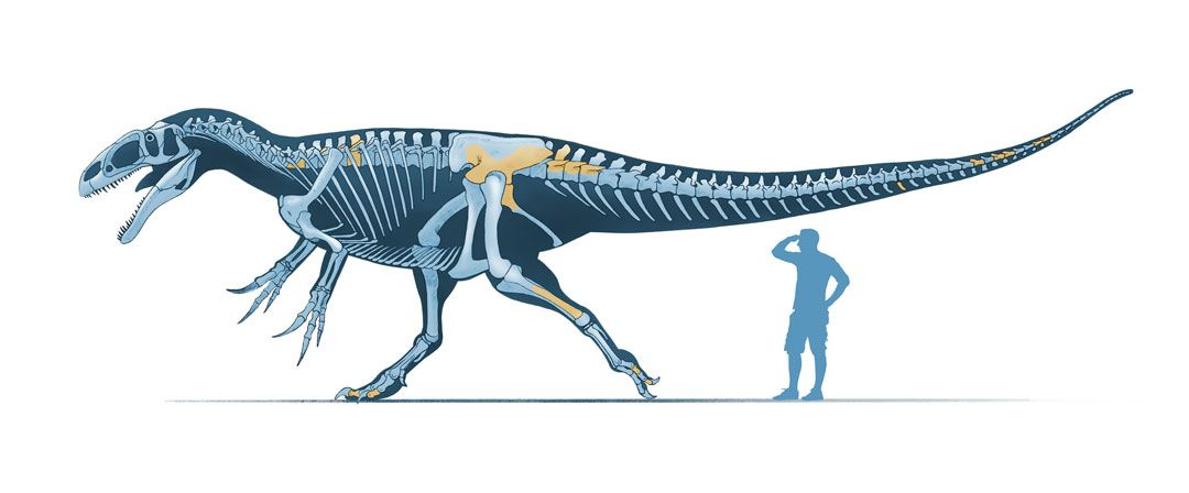Giant dinosaur that rivalled T-rex discovered - The Hindu