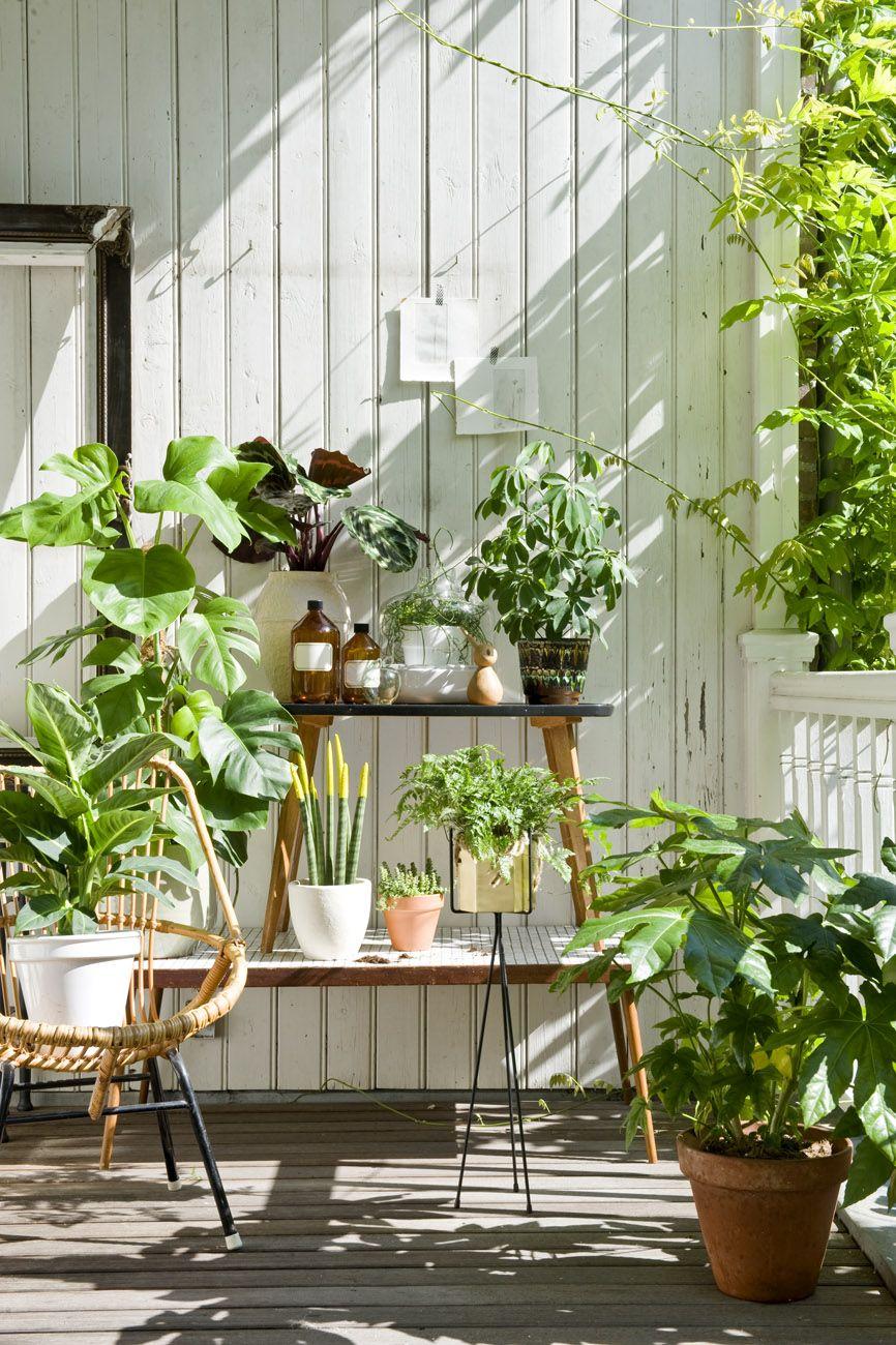 Terracitas con plantitas plantas pinterest - Plantas de interior cintas ...