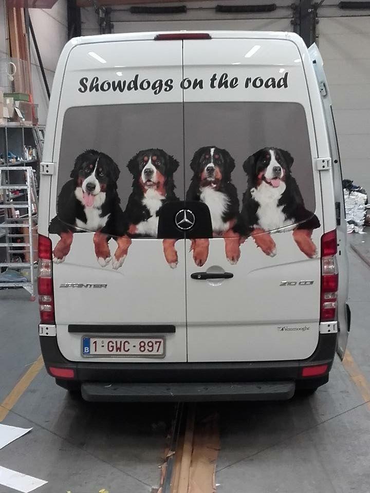 Berners おしゃれまとめの人気アイデア Pinterest Joan Evans 大きい犬 犬
