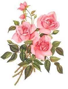 Transfers Rosas Vintage Buscar Con Google Floral Watercolor Flower Art Rose Painting