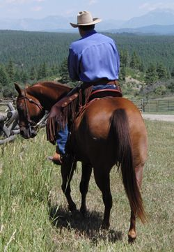 Horse Training Tips - Partial Disengagement For Relaxation While Riding
