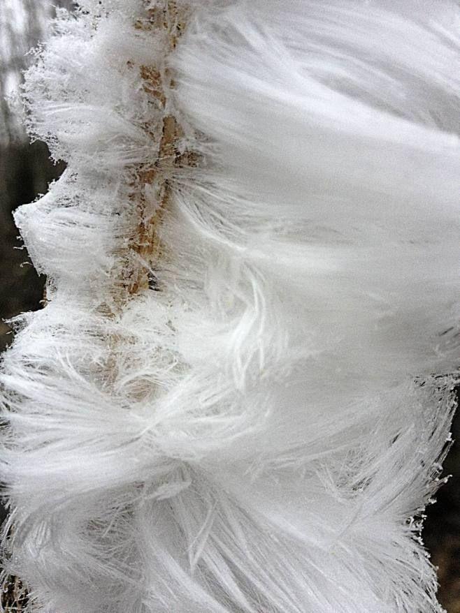 Hiusjää vaatii kasvualustakseen lahoavaa puuta, jonka sienirihmastot syöttävät puun pinnalle kosteutta, joka kiteytyy neulasmaisiksi, alhaal...