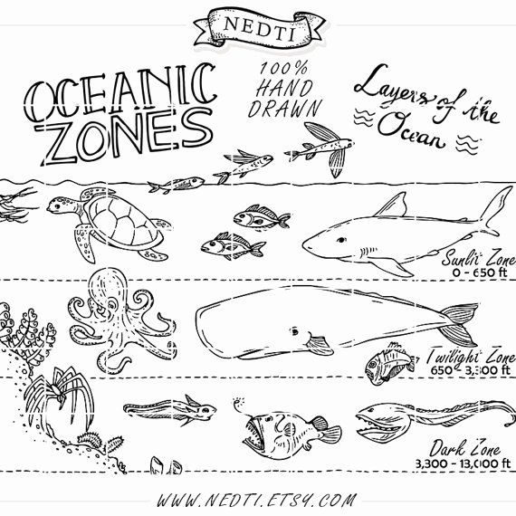 Earth Science Coloring Pages In 2020 Earth Science Ocean Zones