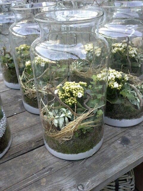 Plant In Glazen Vaas.Vaas Met Planten Planten En Vaas
