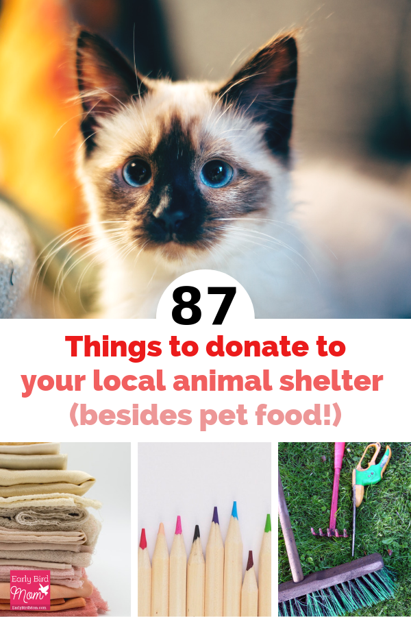 87 Things To Donate To Your Local Animal Shelter Besides Pet Food Animal Shelter Donations Animal Shelter Animal Shelter Fundraiser
