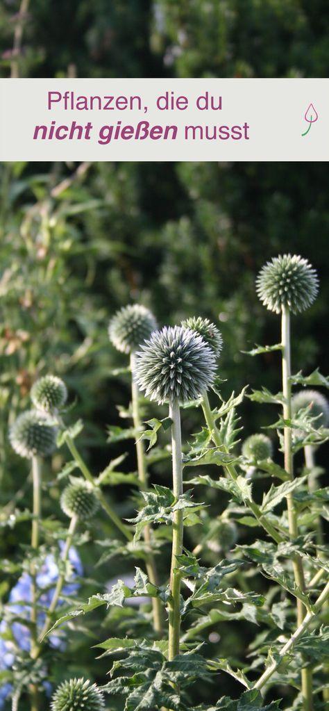 Pflanzen Die Du Nicht Zu Giessen Brauchst Garten Pinterest